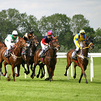 Sports Betting - Horse Racing